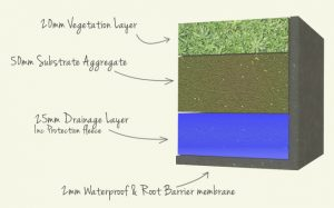 Components of Green Roof