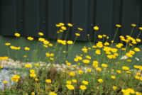 Sedum and Wildflower Mats
