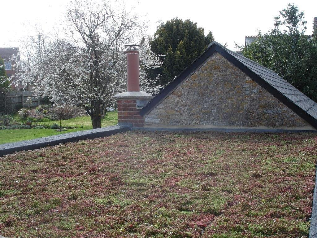 Sedum Grene Roof