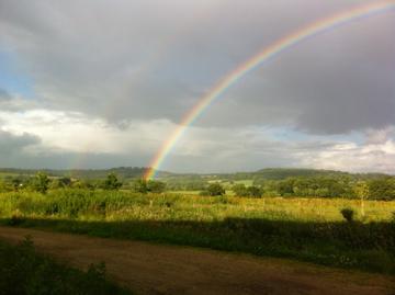 Sedum Grene Roof Rainbow