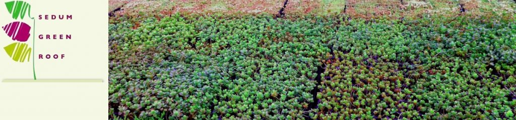 Ready to Lay Sedum Green Roofs