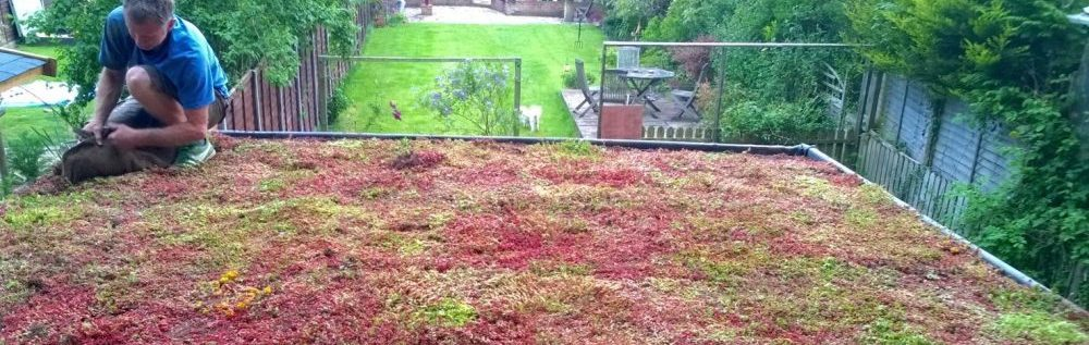 How To Install A Green Roof Green Roof Installation
