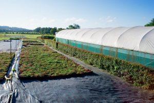 Sedum green roof farm
